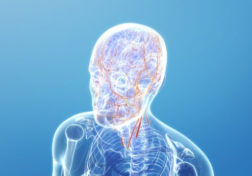 wpływ krążenia krwi na wlosy